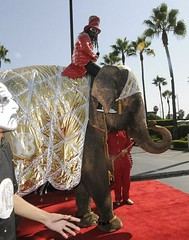 t pain on a elephant .... how can you hate that