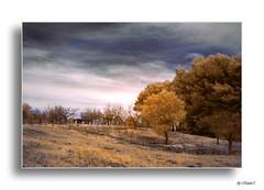 Paesaggio (ph Mario'5) Tags: infrared greatshot paesaggio cisternino infrarosso valleditria