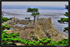 Lone Cypress Tree 17 Mile Drive Pebble Beach California (j glenn montano 3) Tags: california tree beach drive glenn pebble lone 17 cypress mile montano justiniano aplusphoto colourartaward