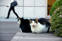 (podgypots) Tags: cats digital cat pentax osaka mew kyobashi osakabusinesspark