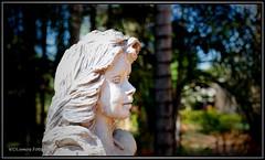 Memorial do Cerrado...Aqui tm  histria de Gois (WDLemos) Tags: memorial cerrado wagner historia goinia goias centrooeste wdlemos