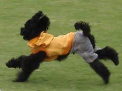 Perro vestido de joven