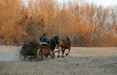 Preparations (cindy47452) Tags: morning horse man wagon early working indiana amish creativecommons fertilizer orangecounty oldorder gasmotor sansogm gentechnikfrei gmofreeandorganic amischbiolandwirtschaft