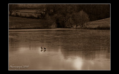 Two Ducklake (pharriergraph) Tags: winter two lake sepia reflections frozen january ducks devon confused woodbury wronglens