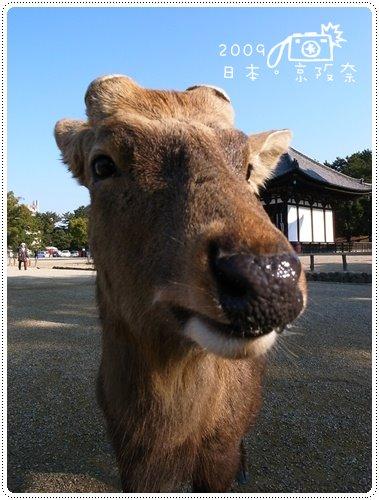 日本104
