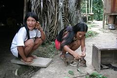 Huaorani women with a young pig (sensaos) Tags: life food pet rural pig ecuador community village indian traditional selva tribal daily jungle indians tribe indios indio indigenous famke huaorani indigena shiripuno waorani sensaos bameno