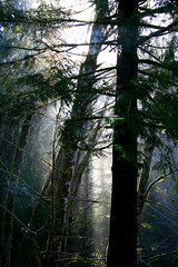 Morning Light in Oregon (jkeenan501) Tags: morning light sun sunlight mist rain fog forest morninglight filteredlight inoregon