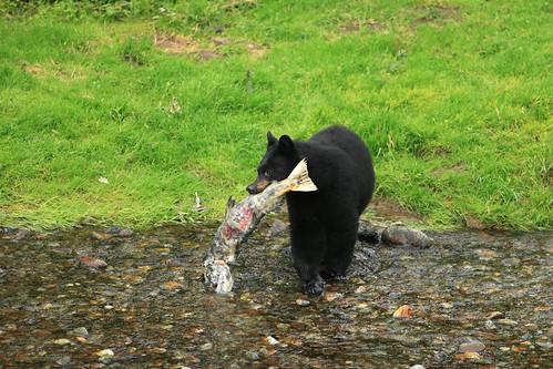 Black Bear .........2