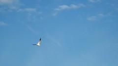 seahawkInAir (mirko796) Tags: flying seahawk