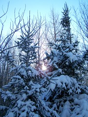Peace (Lily C.) Tags: pink blue trees winter sky snow canada cold beautiful forest hiver country newbrunswick ciel neige campagne lilyc