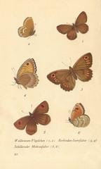 papillons d 16