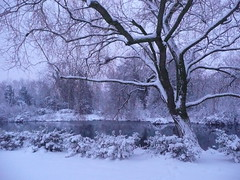 Tree and pond I