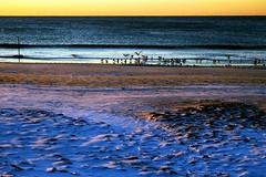 Rockaway Beach Winter Morning Birds (mgarbowski) Tags: nyc snow beach water landscape photo fuji queens 1855mm fujinon rockaway xe1 f284 procontrast fujifilmxe1 fujinon1855mmf284 tmg2014