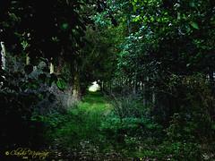 Tunel / Tunnel (Claudio.Ar) Tags: wood trees naturaleza santafe verde green nature argentina rboles sony tunnel bosque picturesque dsc h9 smrgsbord vob cruzadas supershot diamondclassphotographer flickrdiamond excellentphotographersaward theperfectphotographer goldstaraward landscapesdreams treesdies