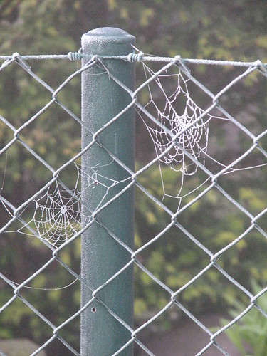 Gefrostetes Spinnennetz im Morgentau