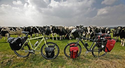 Las bicis nuevas de Santos, nuestro sponsor y las vacas curiosas que vinieron corriendo a ver que pasaba