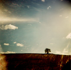 isolated (microabi) Tags: uk tree english mediumformat countryside holga glare westsussex fujifilm isolated chichester trundle witha glasslens takenwithaholga andyesitreallyis
