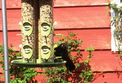 My new Bird Feeder
