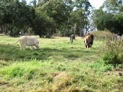 IMG_4513 (texasjr) Tags: lionpark
