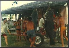 Joo Bida e os meros. Matinhos, Paran . Caa submarina em 1972. (Mauricio Portelinha) Tags: praia peixe parana 1972 pesca litoral meros matinhos caa bida submarina caasubmarina ivaipor