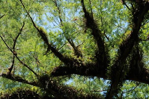 Corkscrew Swamp and Naples 5-4-08 039