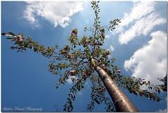 under my tree (AndreaKamal.com) Tags: bravo soe themoulinrouge firstquality justimagine xoxoxoxoxox multimegashot finallythefirst httpwwwandreakamalde