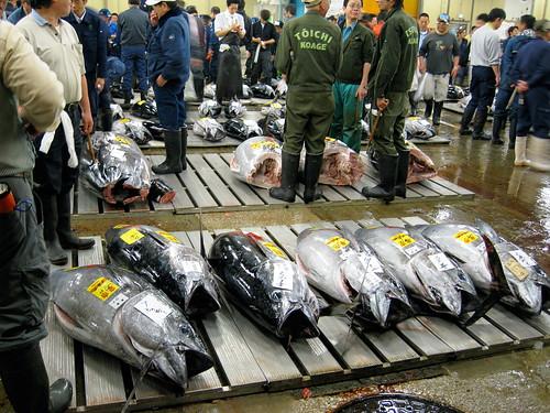 Bluefin tuna in Tokyo fetch $25,000 each.