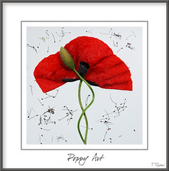 Poppy Art (rusmi) Tags: poppy poppies italians alemdagqualityonlyclub awesomeblossoms