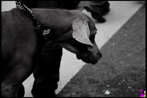 Imagenes De Amor Con Movimiento: Pradasclanol: Imagenes De Amor Con Movimiento
