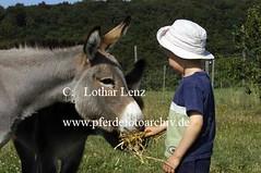 lz280704(77) (Lothar Lenz) Tags: deutschland esel 56812dohr