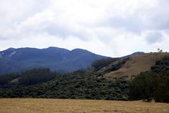 IMG_0796 (Voyage On Wheels) Tags: india grass forest canon 1855mm karnataka masinagudi eos400d