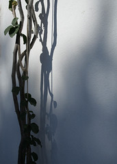 creeper and shadow (wild teasel) Tags: light shadow ibiza creeper oldcity whitewashedwalls