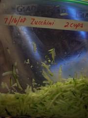 freeze, zucchini