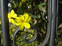 Amarela no porto (Martha MGR) Tags: flores natureza animais paisagens mmgr marthamgr marthamariagrabnerraymundo marthamgraymundo