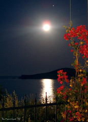 Full Moon (Vasilis Mantas) Tags: flowers sea moon flower olympus fullmoon greece skiathos mantas 5photosaday    ysplix platinumheartaward  700 flickrlovers   bmantas vmantas vmantasphotography