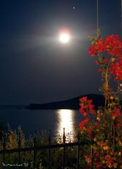 Full Moon (Vasilis Mantas) Tags: flowers sea moon flower olympus fullmoon greece skiathos mantas 5photosaday ελλαδα λουλουδια νησι ysplix platinumheartaward φεγγαρι μ700 flickrlovers πανσεληνοσ σκιαθοσ bmantas vmantas vmantasphotography