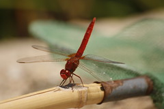 Gone Fishin' (adamobailey) Tags: travel red holiday colour macro up landscape scenery close photos dragonfly no july insects bugs spanish dor 2008 mallorca cala limits
