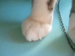 MOAR TOES!!!1!!! (DaniMakes) Tags: pet cat kitty benito