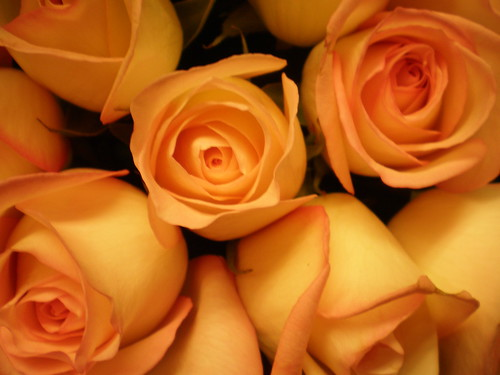Yellow Orange Roses