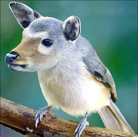 حيوانات وطيور لم تشاهدها من قبل  ( فوتوشوب ) 2823450420_b4a738879f.jpg?v=0
