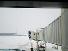Snowy at YVR