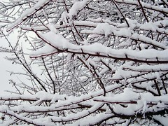 06-ice-n-snow-branches