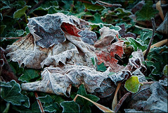 As cold as it gets (abanib) Tags: frost hielo escarcha xiada moraa
