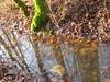 alberi ed acqua