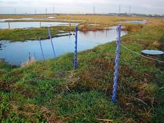 Rainham marsh