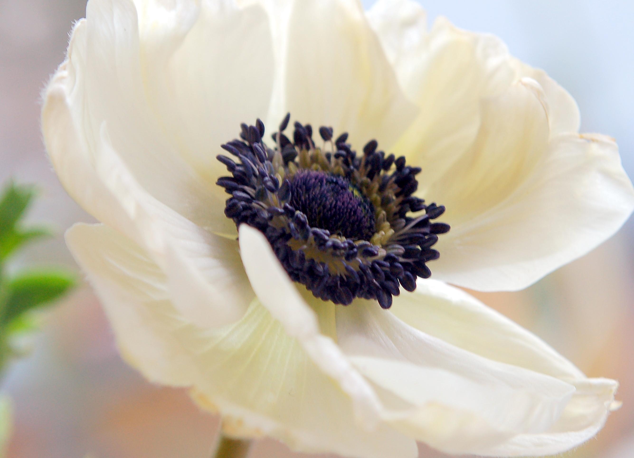 flowers a z flower blog