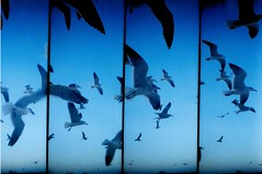 supersampler (Tlish ) Tags: bird lomo lomography supersampler sss talithamtz