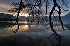 Morgenstimmung_II (mb arts) Tags: lake tree sunrise schweiz switzerland see nikon thun nikkor baum thunersee berneroberland d300 175528