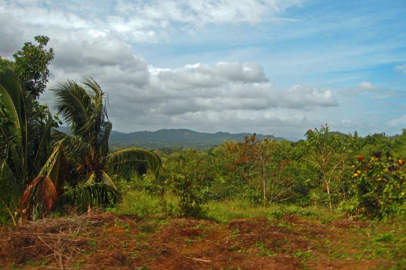 Jamaica Landscape