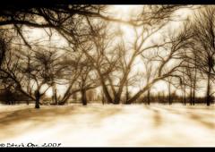 Winter Light (Craig - S) Tags: trees winter light snow cold sepia canon eos rebel michigan explore rays soe hdr orton lightroom abigfave riverwinter yourphototips novavitanewlife 4degreesfreezingatthetime usedtripodduetofreezingnumbhands